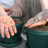 Setting up an Organic Garden at School