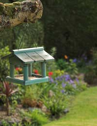 Simple Ways to Help Birds
