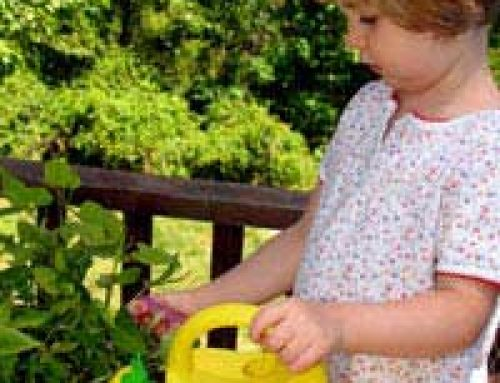 Are You an Eco-friendly Gardener?