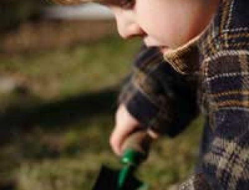 Simple Soil Experiments for Schools
